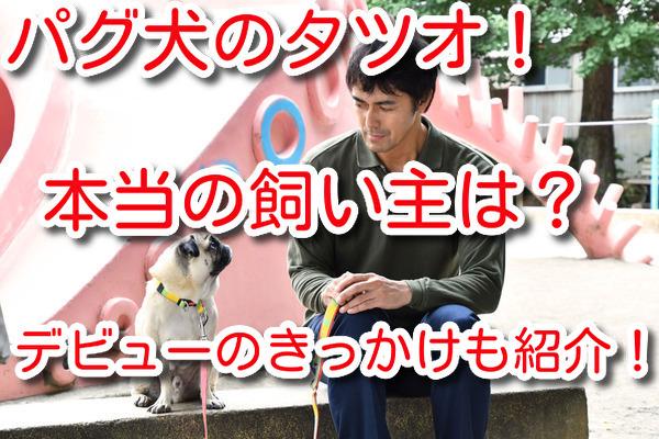 まだ結婚できない男 パグ 田中太郎 飼い主 誰 かわいい インスタ 画像